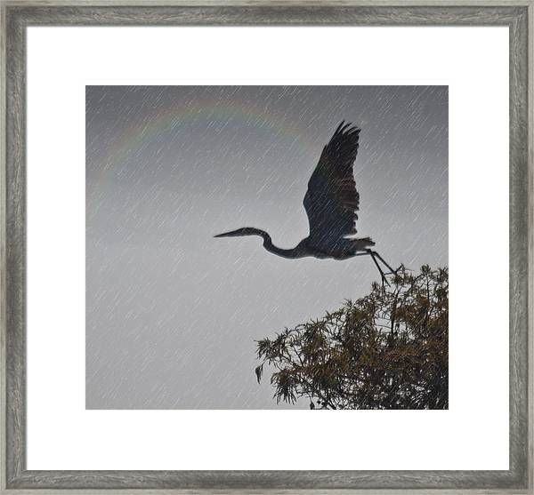 Egret Silhouette Framed Print by Bill Perry