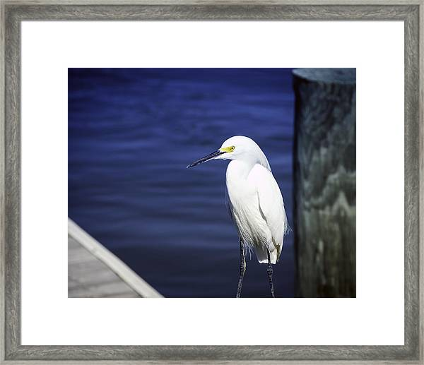 Framed Print featuring the photograph Egret Standing Tall by William Havle