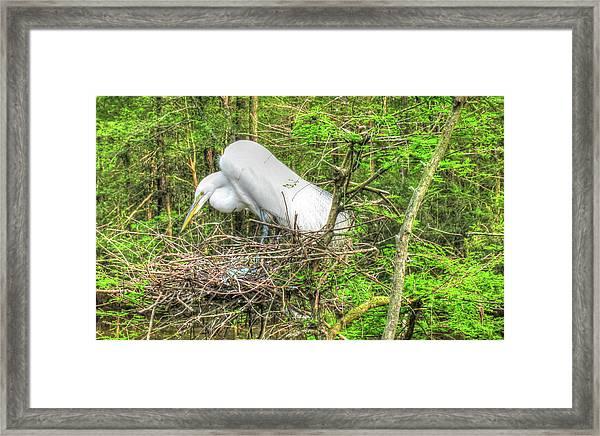 Egrets And Eggs Framed Print