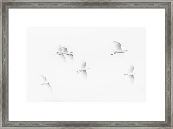 Egrets White On White B/w Framed Print
