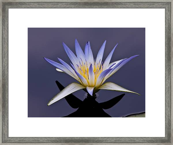 Egyptian Lotus Framed Print
