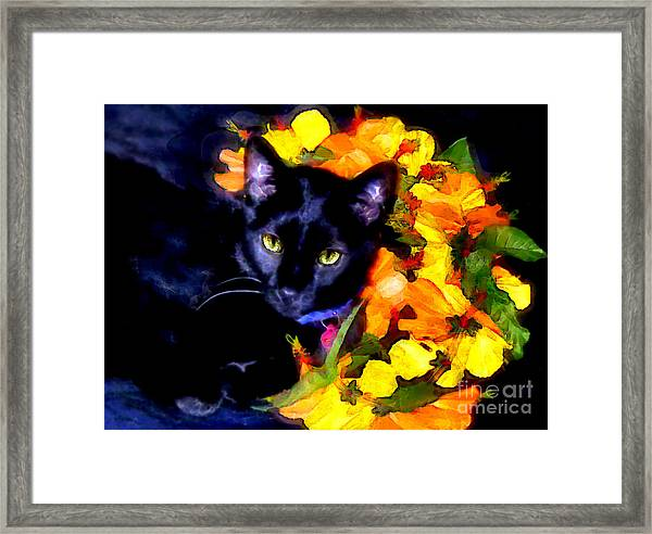 Einstein The Cat Framed Print