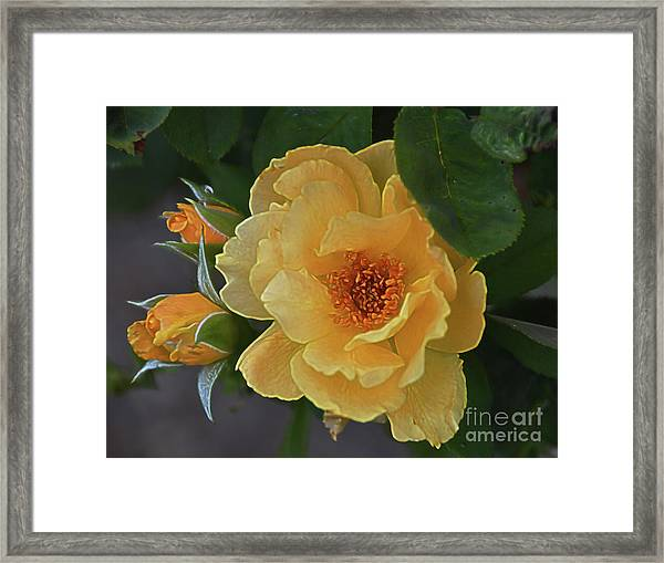 Elation Framed Print