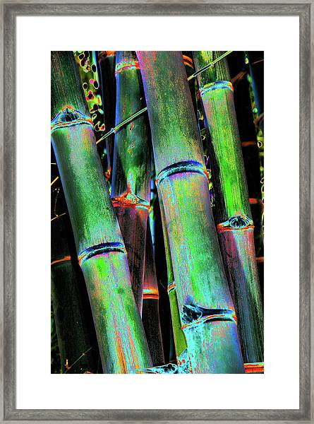 Electric Bamboo 4 Framed Print