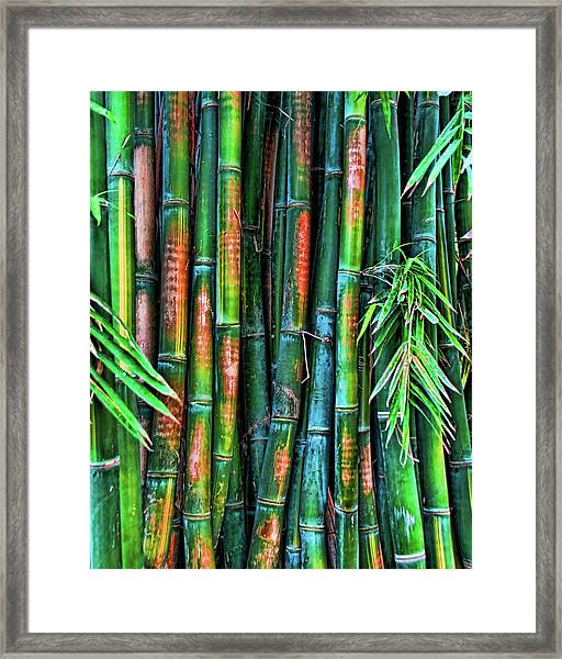 Electric Bamboo 6 Framed Print