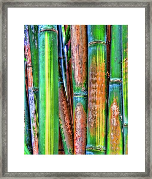 Electric Bamboo 7 Framed Print
