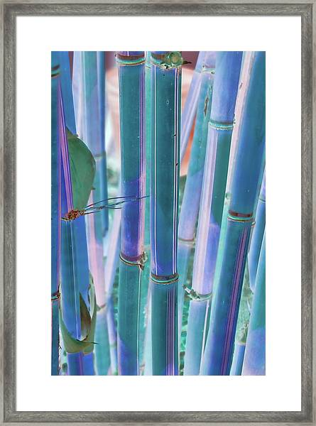 Electric Bamboo 8 Framed Print