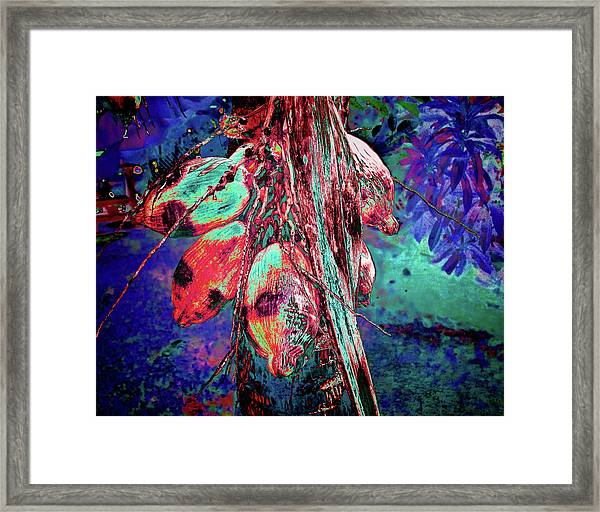 Electric Coconut 1 Framed Print