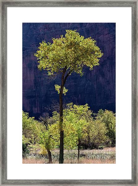 Elegance In The Park Utah Adventure Landscape Photography By Kaylyn Franks Framed Print