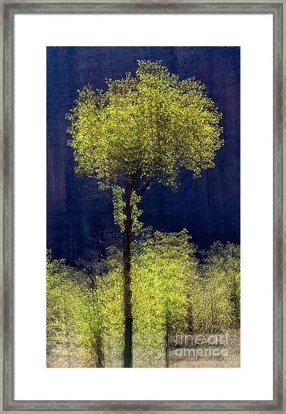 Elegance In The Park Vertical Adventure Photography By Kaylyn Franks Framed Print