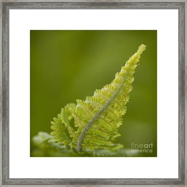Elegant Fern. Framed Print