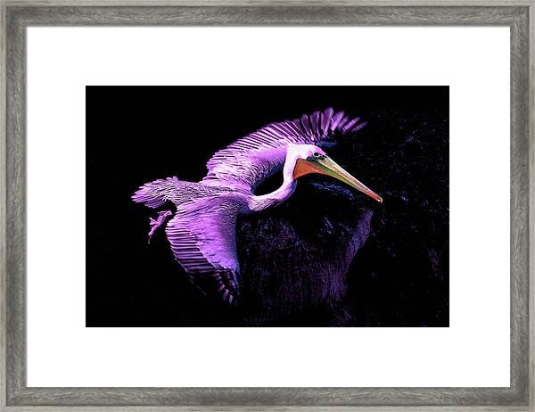Elegant Flight In Violet Framed Print
