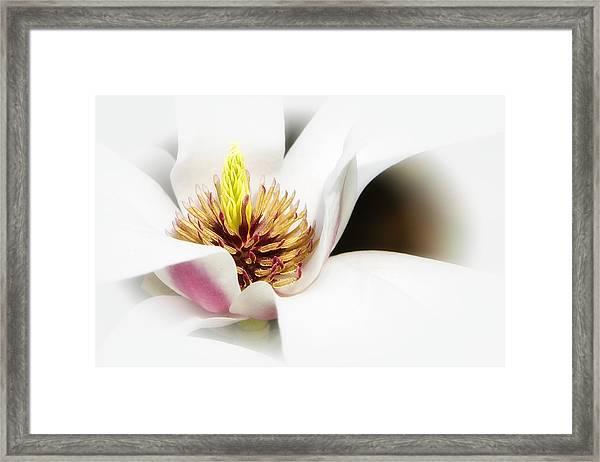Elegant Magnolia Framed Print