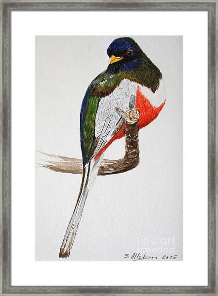 Elegant Trogon Framed Print