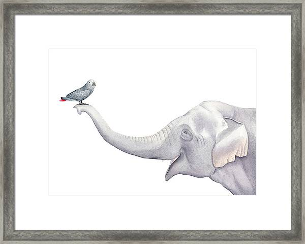 Elephant And Bird Watercolor Framed Print