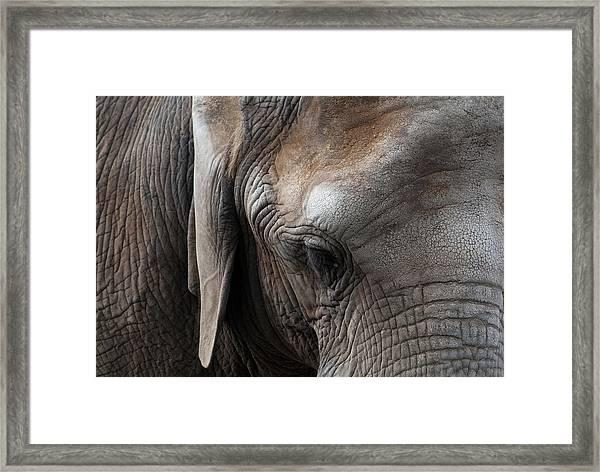 Framed Print featuring the photograph Elephant Eye by Lorraine Devon Wilke