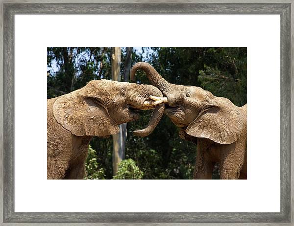 Elephant Play Framed Print