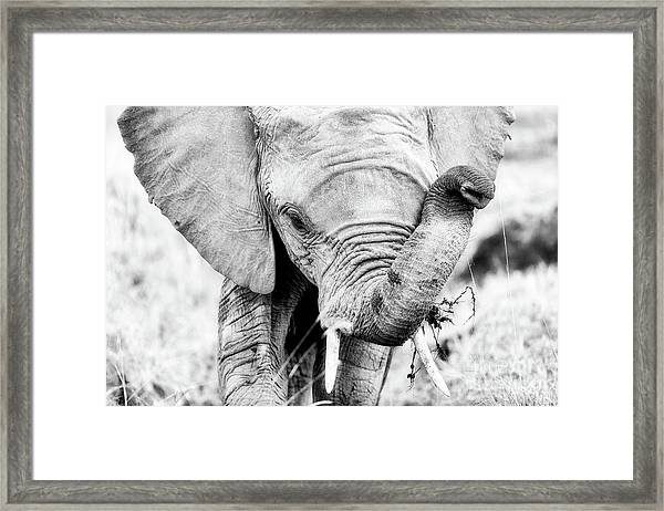 Elephant Portrait In Black And White Framed Print