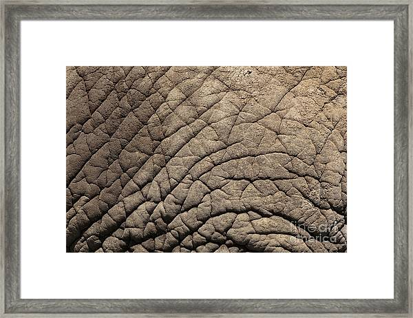 Elephant Skin Background Framed Print