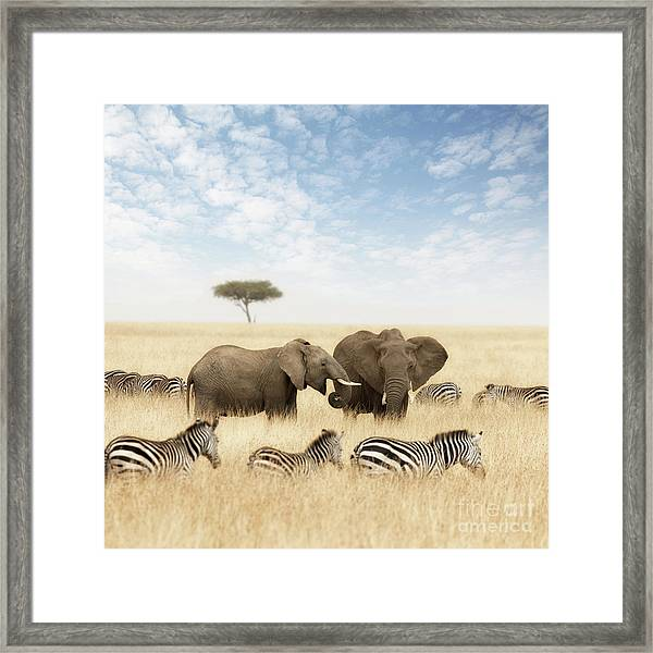 Elephants And Zebras In The Grasslands Of The Masai Mara Framed Print