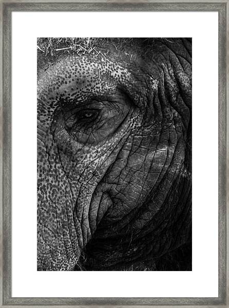 Elephants Eye Framed Print