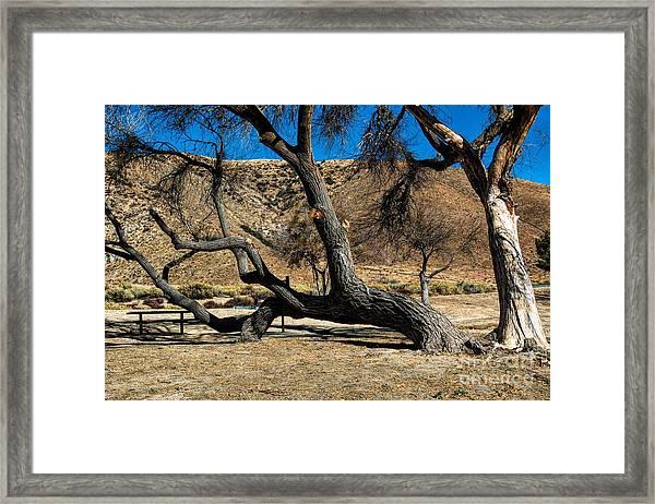 Elizabeth Lake Tree Framed Print