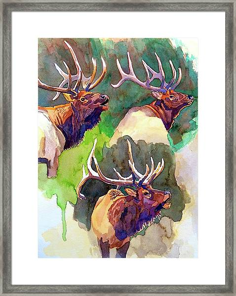 Elk Studies Framed Print