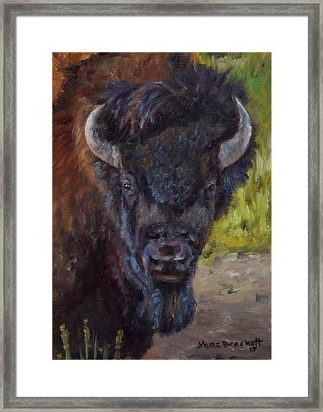 Elvis The Bison Framed Print
