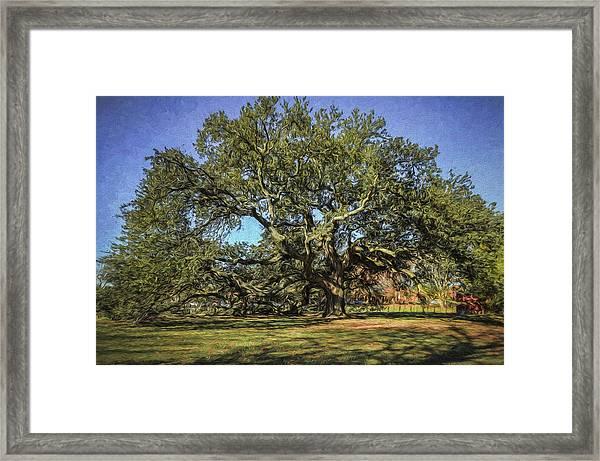 Emancipation Oak Tree Framed Print
