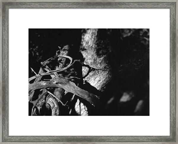 Embrace Framed Print