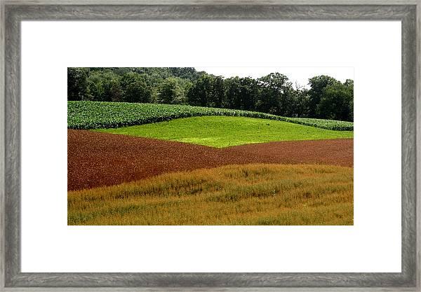 Emerald Fields Framed Print by Monika A Leon