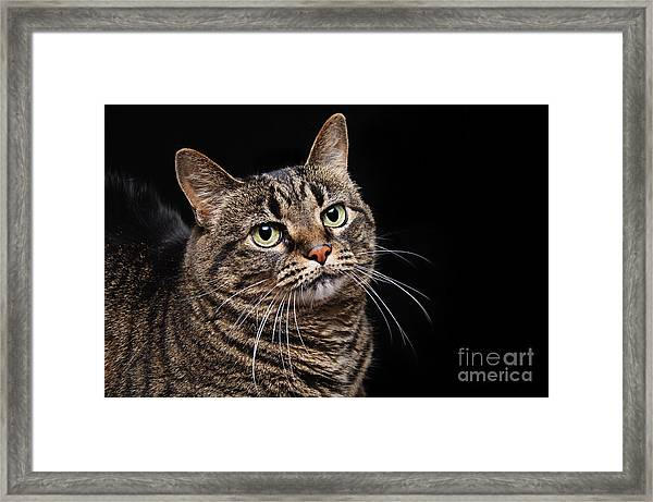 Emmy The Cat Ponder Framed Print