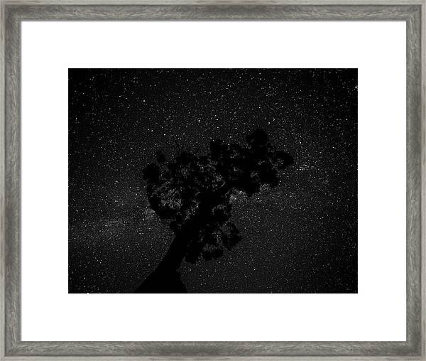 Empty Night Tree Framed Print