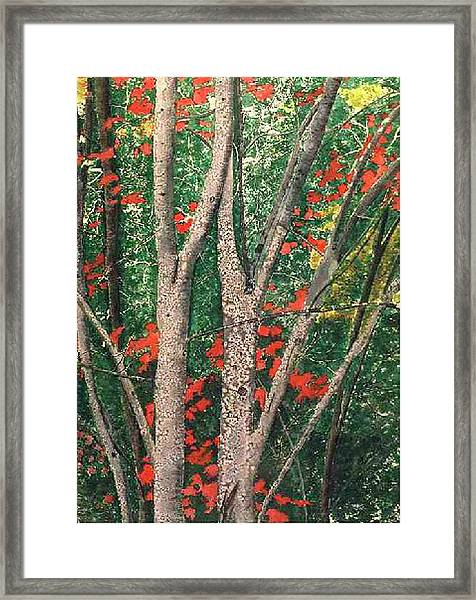 Enchanted Birches Framed Print