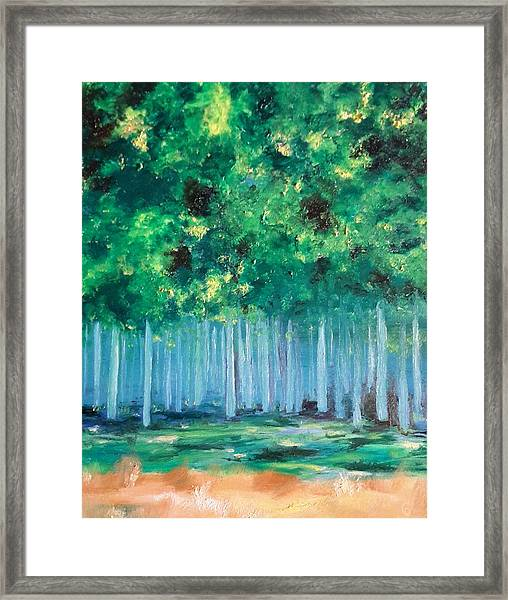 Enchanted Poplars Framed Print