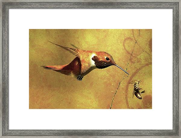Encounter 2 Framed Print