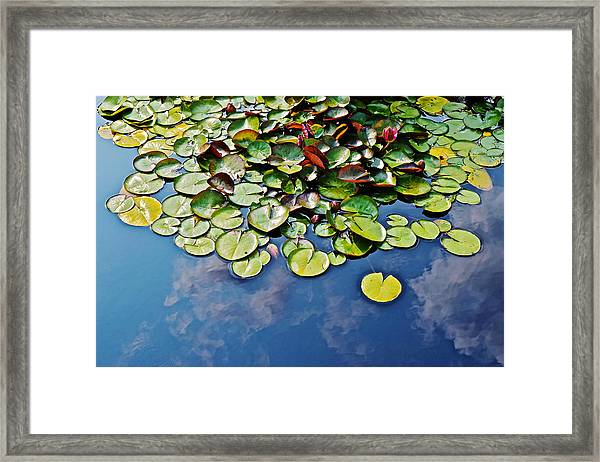 End Of July Water Lilies In The Clouds Framed Print