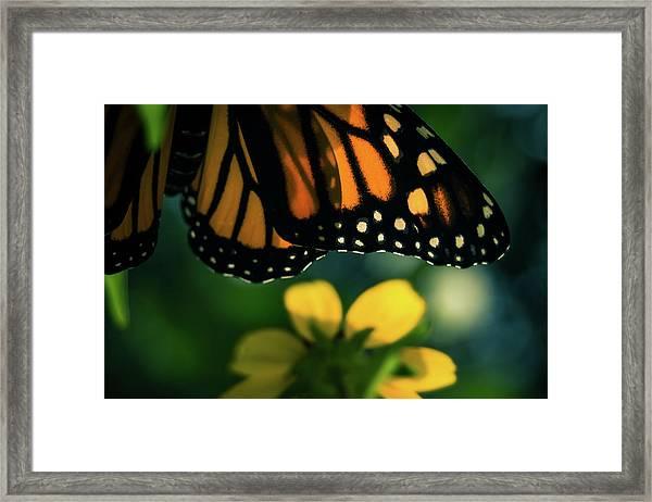 End Of Summer Monarch Framed Print