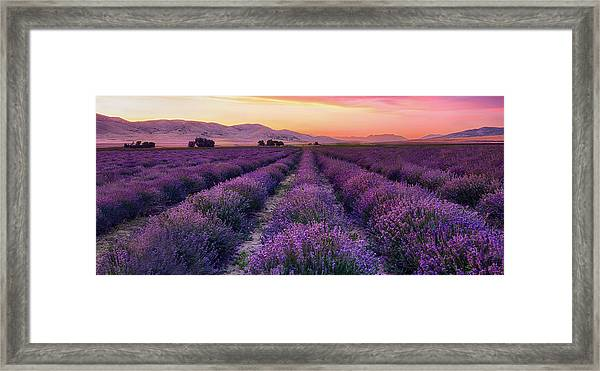 Endless Lavendar 65 Framed Print