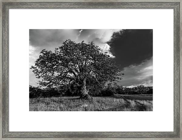 Engellman Oak Palomar Black And White Framed Print
