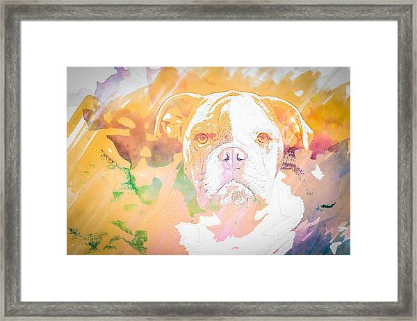 English Bulldog Wc Framed Print