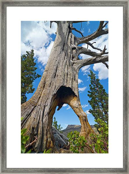 Ent Tree On The Move Framed Print