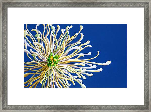 Entendulating Serene Blossom Framed Print