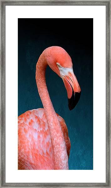 Entirely Unimpressed Flamingo Framed Print