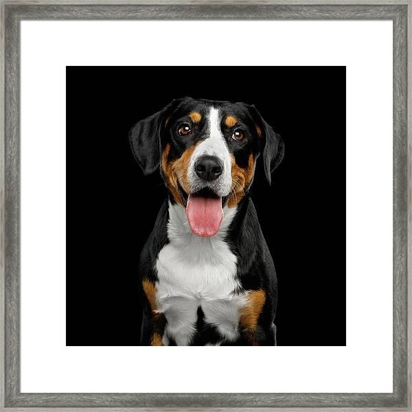 Entlebucher Sennenhund Framed Print