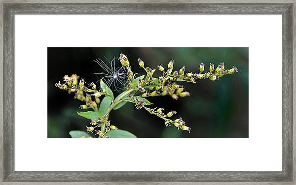 Entrapped Framed Print