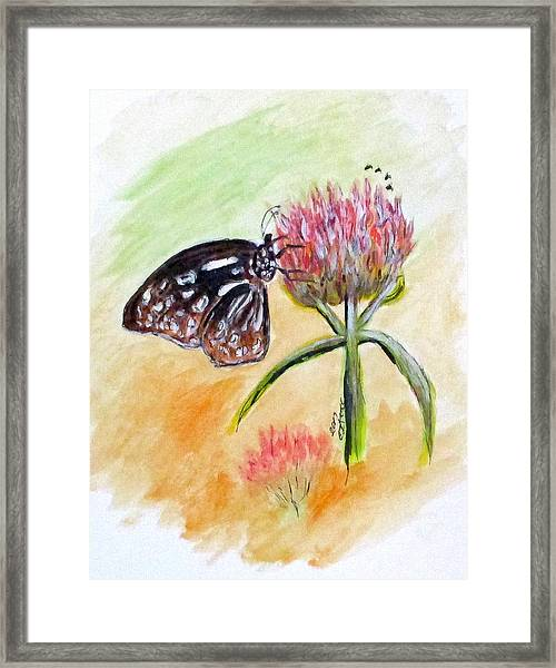 Erika's Butterfly Two Framed Print
