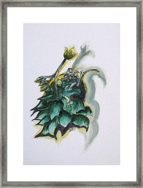 Erika's Spring Plant Framed Print