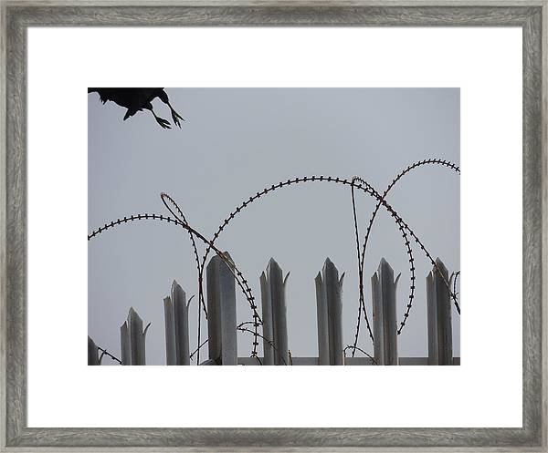 Escape To Freedom Framed Print
