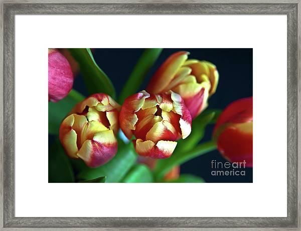 Eternal Sound Of Spring Framed Print